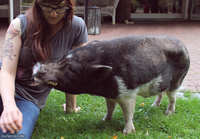schweinelovestory