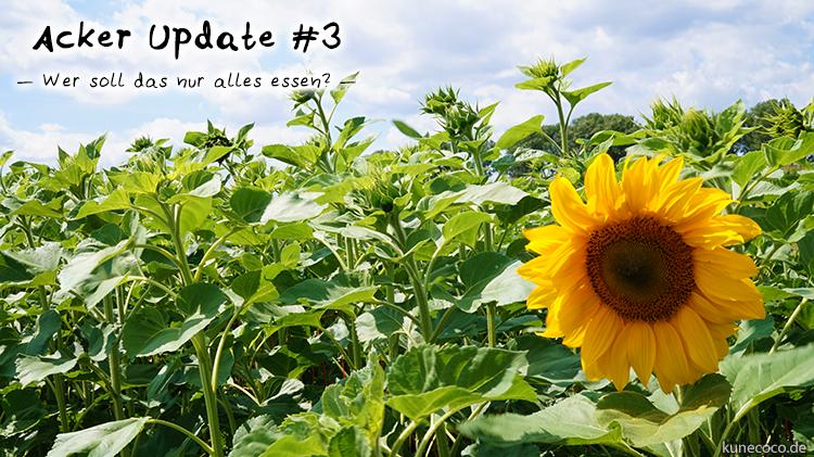 Acker Update #3 ~ Wer soll das nur alles essen?