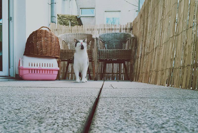 KuneCoco • Schnurrberts Jubiläum • Katzensicherer Balkon