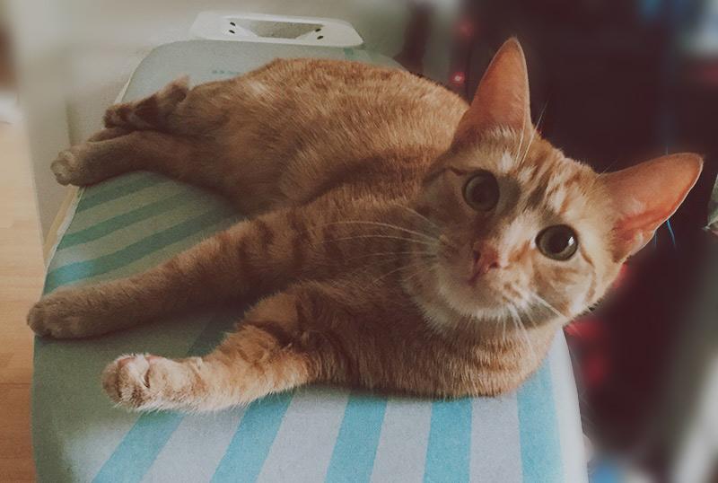 KuneCoco • Schnurrberts Jubiläum • Katze im Haushalt
