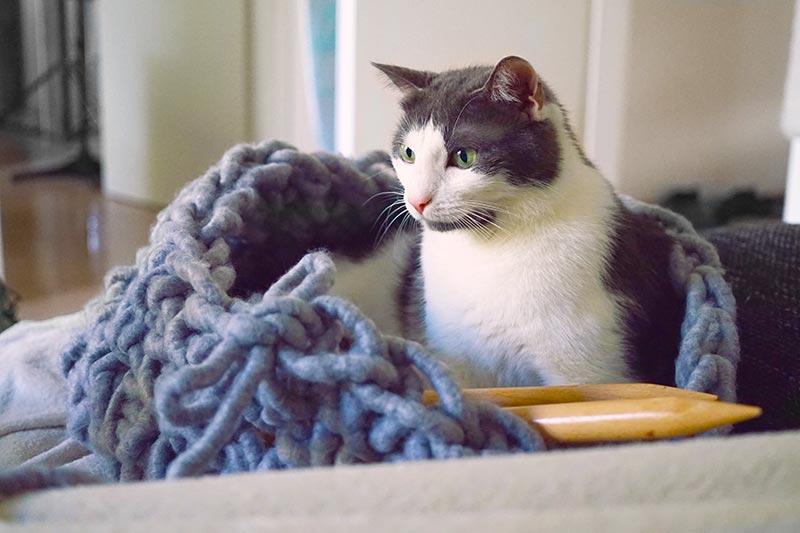 KuneCoco • Winterzeit ist Bastelzeit! • Mero im Katzenbett