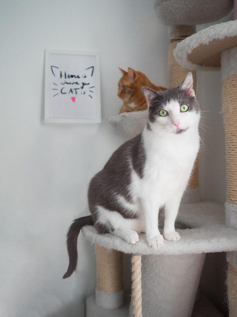 KuneCoco • Aus dem Leben einer Katzenlady #3 • Schnurrberts mit Katzen-Lettering