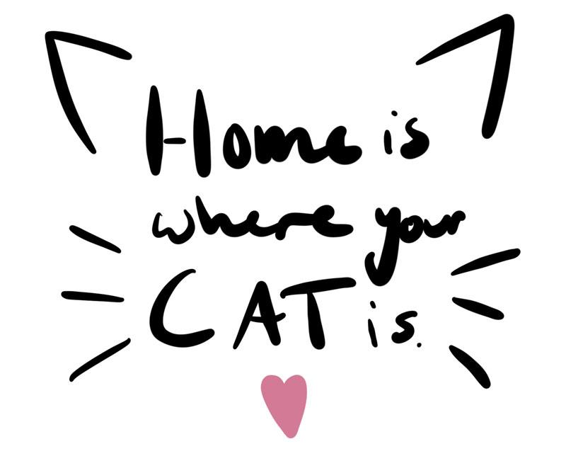 KuneCoco • Aus dem Leben einer Katzenlady #3 • Home is where your cat is