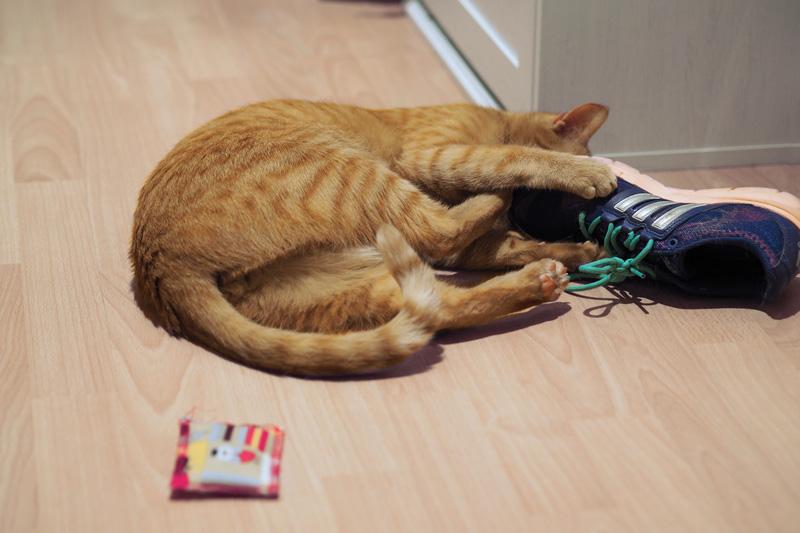 Katzenspielzeug wird knallhart ignoriert