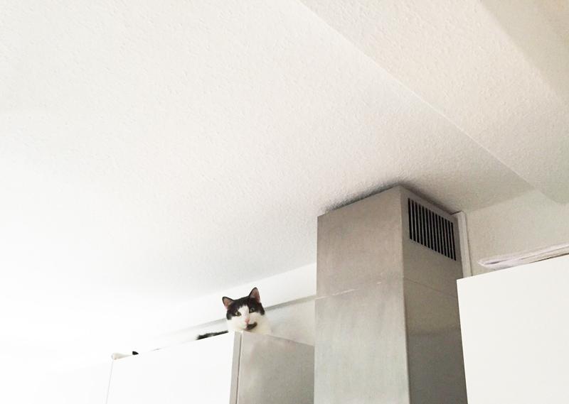 Katzenversteck: Mero