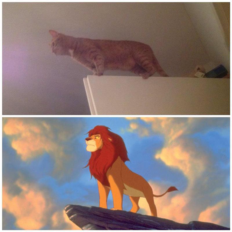 Gimli the Lionking