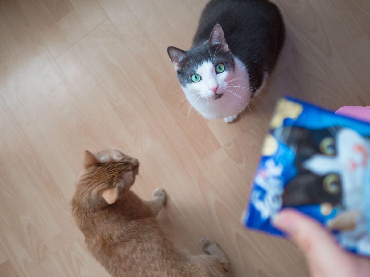 Ein Blick sagt mehr als tausend Katzenworte