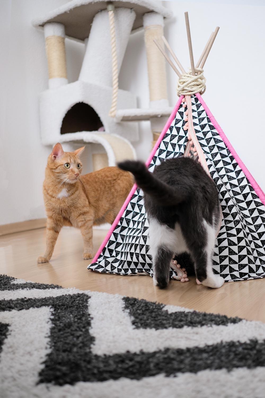 5 Ideen gegen Katzenlangeweile