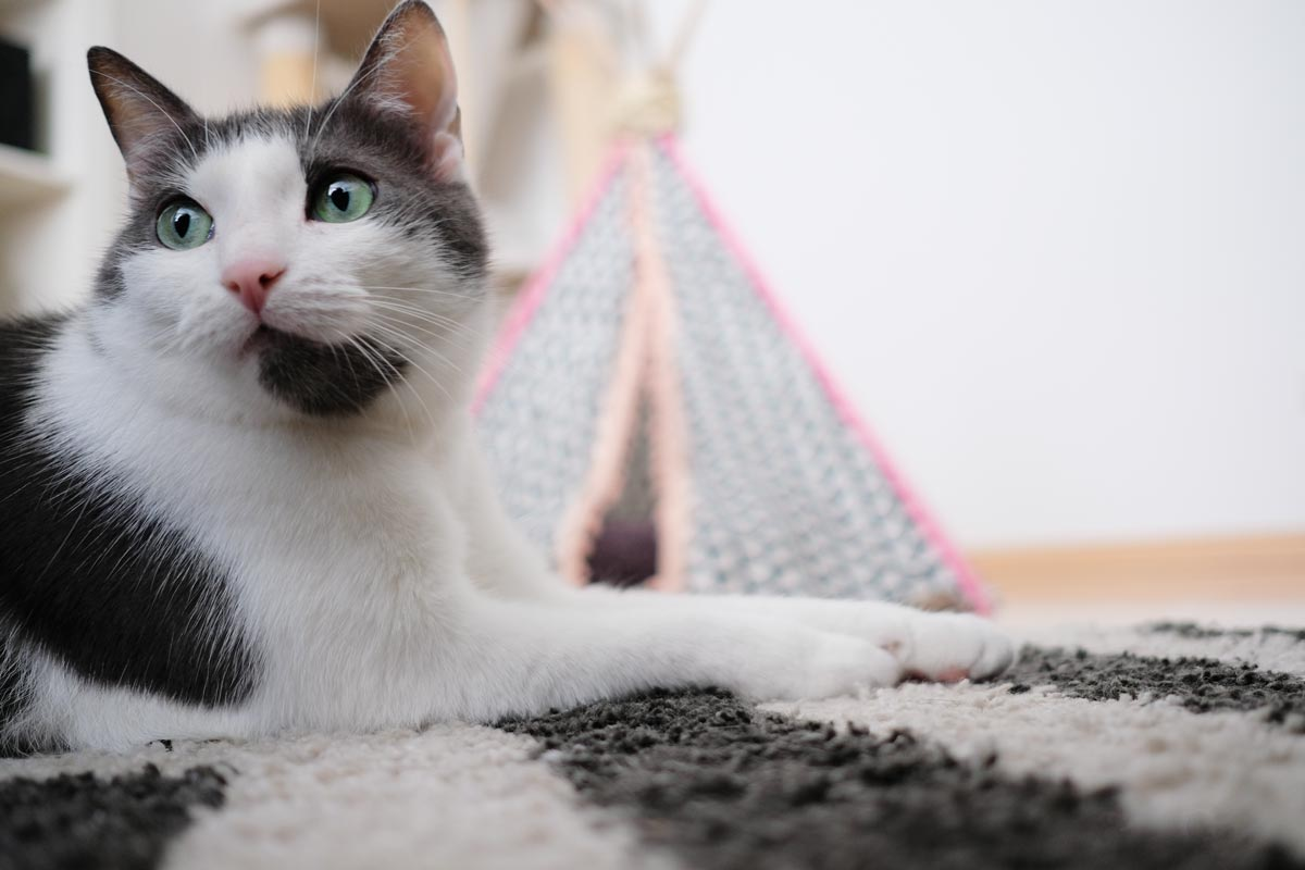 KuneCoco • FELIX • Langeweile bei Katzen