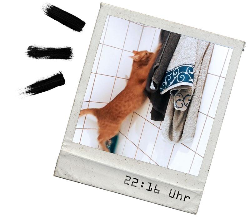 KuneCoco • FELIX • Ein Tag im Leben der Schnurrberts
