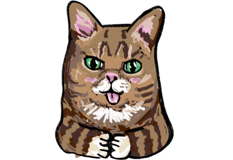 KuneCoco • Katzen Memes • Lil Bub