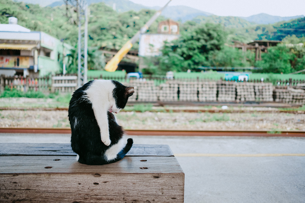 Houtong Cat Village • Taiwan